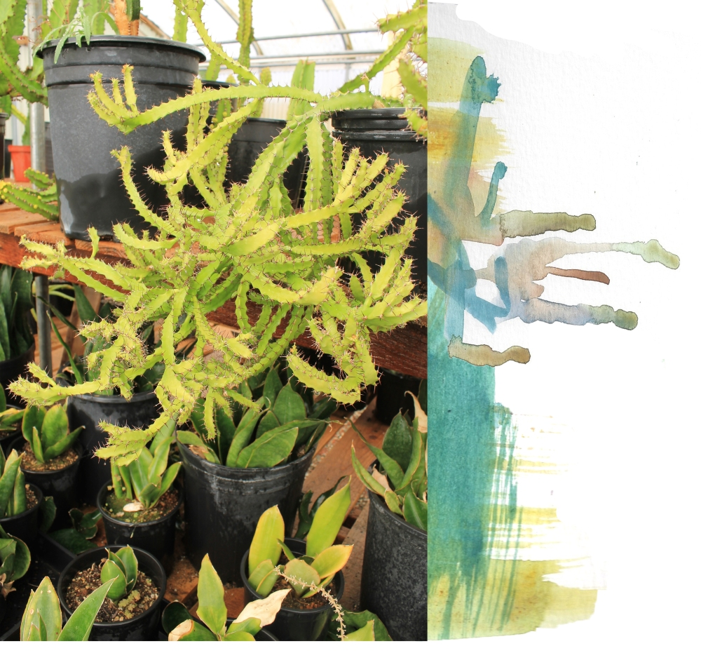 greenplanty
