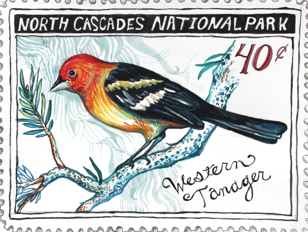 westerntanager2